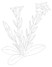 fesche-gretl-naturkosmetik